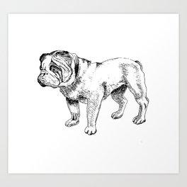 Bulldog Ink Drawing Art Print