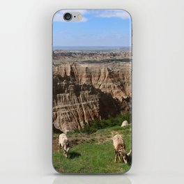 Bighorn Sheep At Sage Creek iPhone Skin
