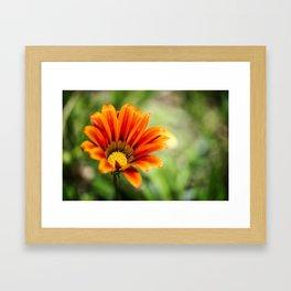 Macro Flower #2 Framed Art Print