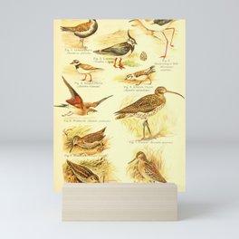 William Playne Pycraft - A Book of Birds (1908) - Plate 14: Waders: Plovers, Curlews, Snipes Mini Art Print