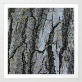 TEXTURES -- Fremont Cottonwood Bark Art Print