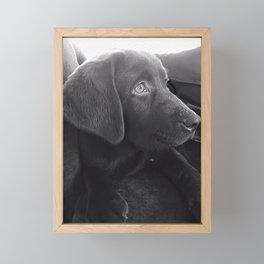 Labrador Puppy Portrait Framed Mini Art Print
