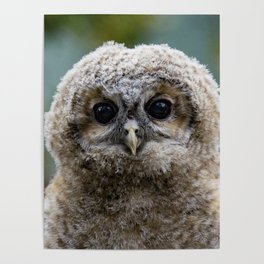 Owl_20180216_by_JAMFoto Poster