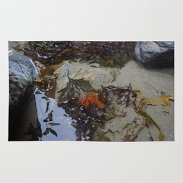 Collection of Seaweed in a Shallow Rockpool Rug
