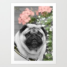 Pug with pink flowers,Animal nursery art,dog nursery art,nursery dog print,cute pug face,pug face Art Print