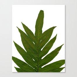 Tropical Fern Botanical Canvas Print
