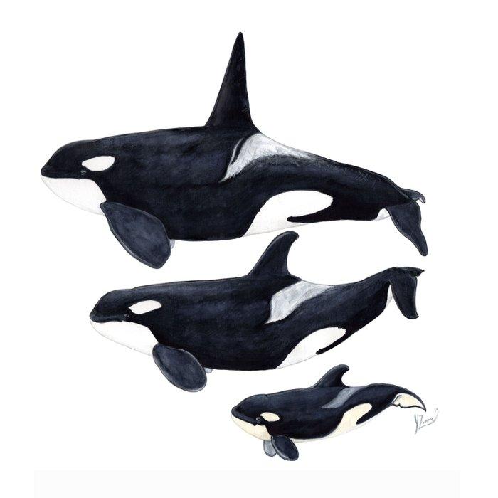 Orca (Orcinus orca) Duvet Cover