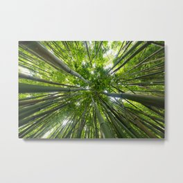 Looking Up A Bamboo Forest Canopy, Haleakala, Maui, Hawaii Metal Print