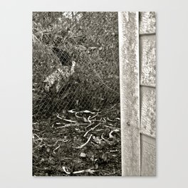 Forest Cat Canvas Print