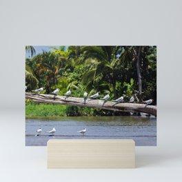 Royal terns - Costa Rica Mini Art Print