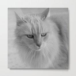 Whiskers 2 Metal Print