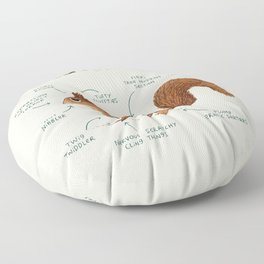 Anatomy of a Squirrel Floor Pillow