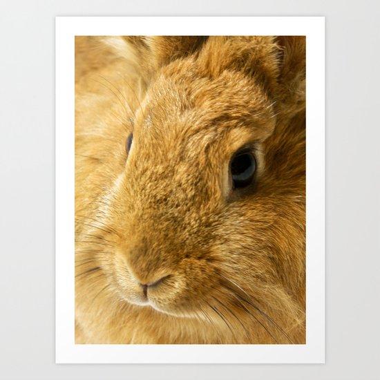 Little Rabbit II Art Print