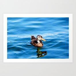 Sitting Duck Art Print