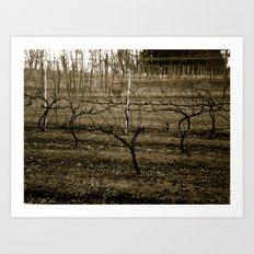 Vineyard Art Print