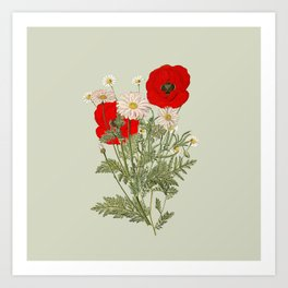 A country garden flower bouquet -poppies and daisies Art Print