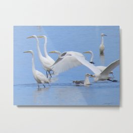 Great Egrets Metal Print
