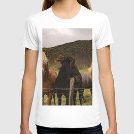 Horses 3 photo T-shirt