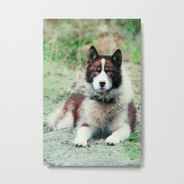 Greenland Dog Metal Print