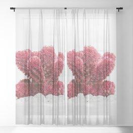 Modern Cactus IV Sheer Curtain