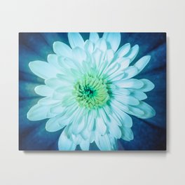 Brilliant Flower Abstract Botanical / Nature / Floral Photograph Metal Print