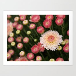 Early Bloomer Art Print