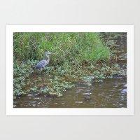 water crane Art Print