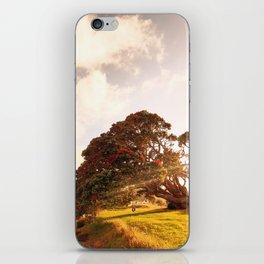 Pohutukawa swing tree iPhone Skin