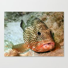 Coral Grouper Being Cleaned Canvas Print