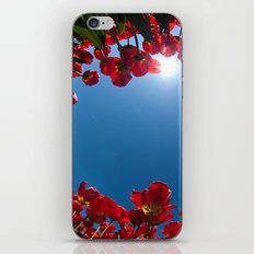 Tulips iPhone & iPod Skin