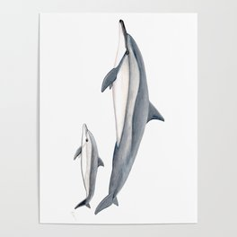 Long-beaked dolphin and baby Poster