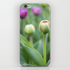 Tulip Bloom iPhone & iPod Skin