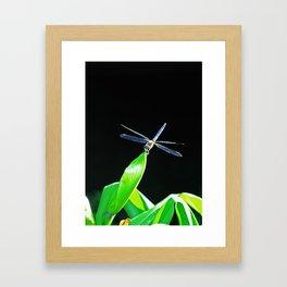 Dragon Tipped Framed Art Print