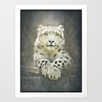 snow leopard Art Prints featuring Snow Leopard by Pauline Fowler ( Polly470 )