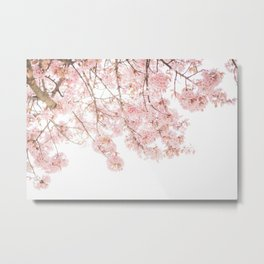 Pink Blooming Cherry Trees Metal Print