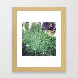 Mako meandering through mushrooms Framed Art Print