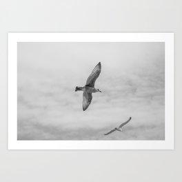 seagull in grey Art Print