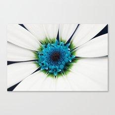 White petals Canvas Print