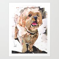 shih tzu Art Prints featuring Simba The Shih Tzu by Maritza Hernandez