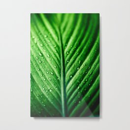 Rainy Days 7 Metal Print