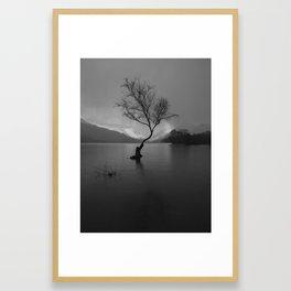 lonely tree thunder storm Framed Art Print