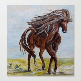 Splashing the Light - Young Horse Canvas Print