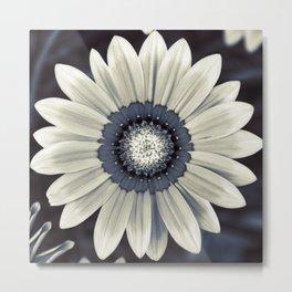 Flower B1 Metal Print