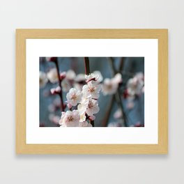Plum Blossoms Japanese Ume Tree in Early Spring Photography Framed Art Print