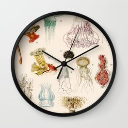 Adolphe Millot - Mollusques 02 - French vintage zoology illustration Wall Clock