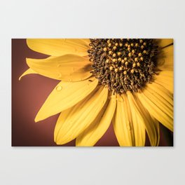 Summer Dew Drops Canvas Print