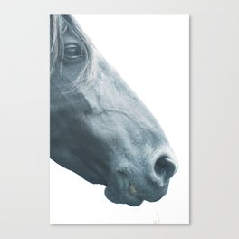 Horse head - fine art print n° 2, nature love, animal lovers, wall decoration, interior design, home Canvas Print