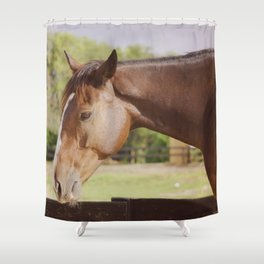 Frank in the sunlight Shower Curtain