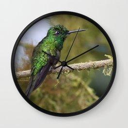 Green Brilliant Hummingbird, Santa Lucia, Ecuador Wall Clock
