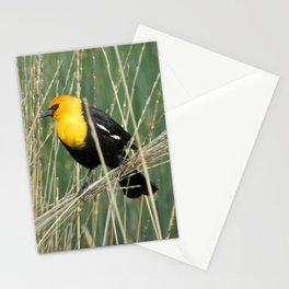 Yellow-headed Blackbird Hanging Around Stationery Cards